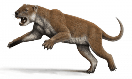 Reconstruction of Thylacoleo. CREDIT by Mauricio Antón