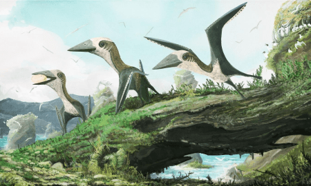 Artist impression of the small-bodied, Late Cretaceous azhdarchoid pterosaur from British Columbia. These flying reptiles are shown here not surrounded not by other pterosaurs, but birds. Some researchers have argued that small pterosaurs were ecologically replaced by birds by the Late Cretaceous, but the discovery of new, small-bodied pterosaur remains from British Columbia shows that at least some smaller flying reptiles lived alongside ancient birds. . CREDIT Dr Mark Witton