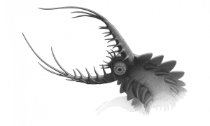 Reconstruction of Pambdelurion . Credit: Robert Nicholls, Palaeocreations