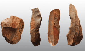 Extensive heat treatment in Middle Stone Age shows that controlled use of fire may have occurred at early stage of tool and blade production. The photo shows heated artefacts in silcrete made by Homo sapiens at Klipdrift Shelter, South Africa. Photo: Katja Douze, University of the Witwatersrand