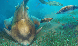 Life reconstruction of Qilinyu along with Guiyu and Entelognathus in Silurian waters (drawn by Dinghua Yang).