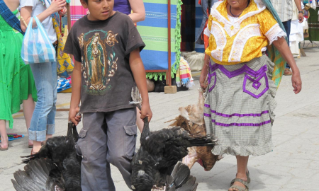 A boy with domestic turkeys in Oaxaca. near where the ancient turkey remains were discovered. CREDIT © Linda Nicholas, The Field Museum.