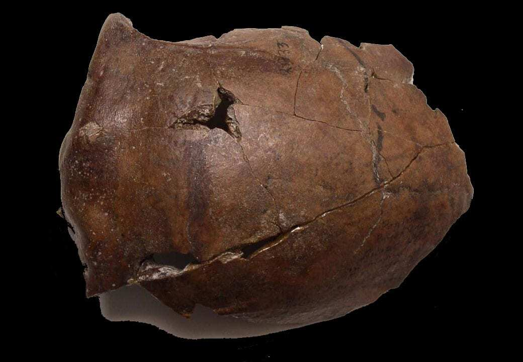 '6000-year-old skull likely of world's oldest tsunami victim'