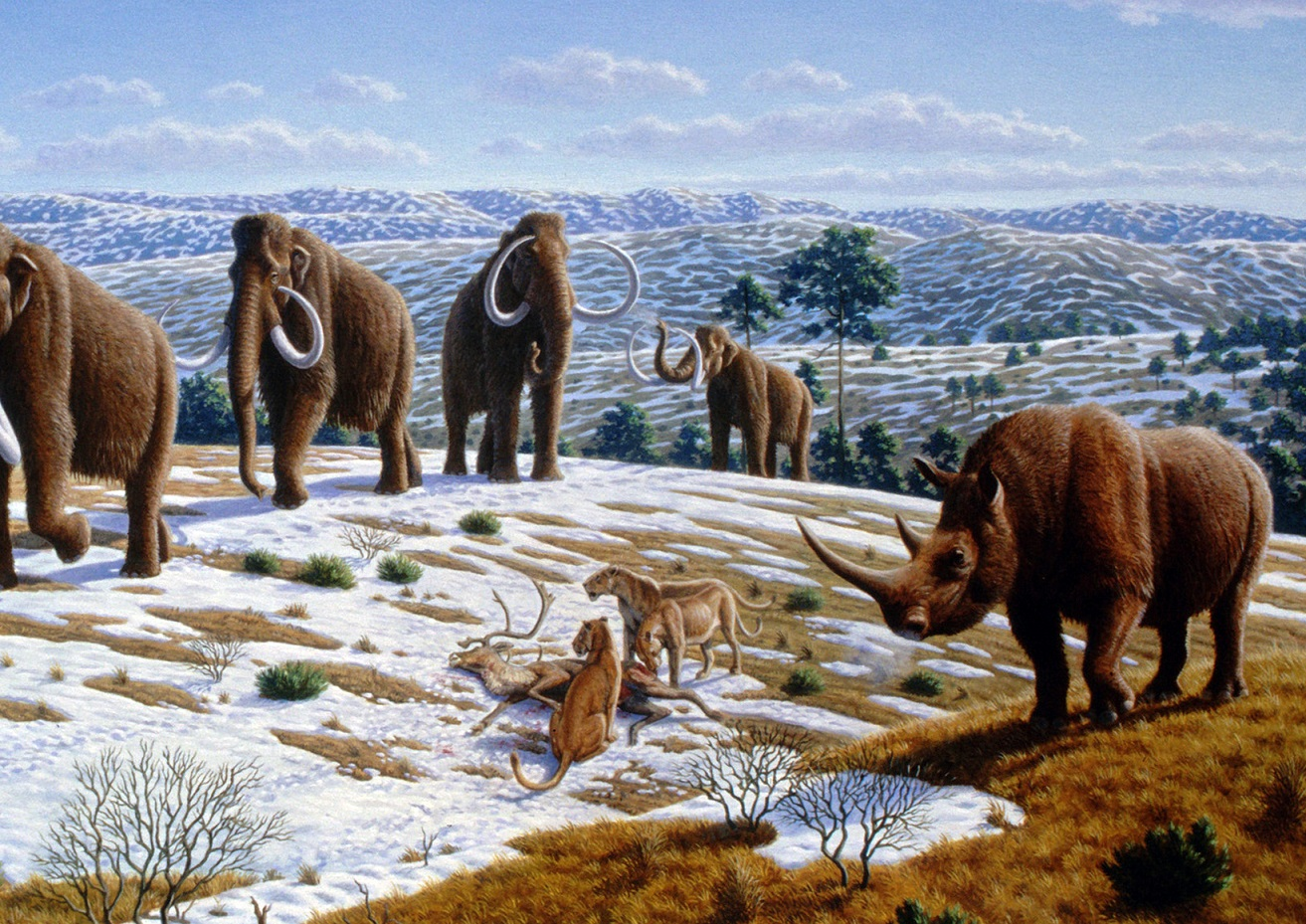 an analysis of the ice age extinctions of the megafauna Life in the ice ages: adaptation, survival and extinction  review  in particular the megafauna of the pleistocene: woolly mammoth, dire  from  where did scientists find the mammoth dna they used to analyze its genome 3.
