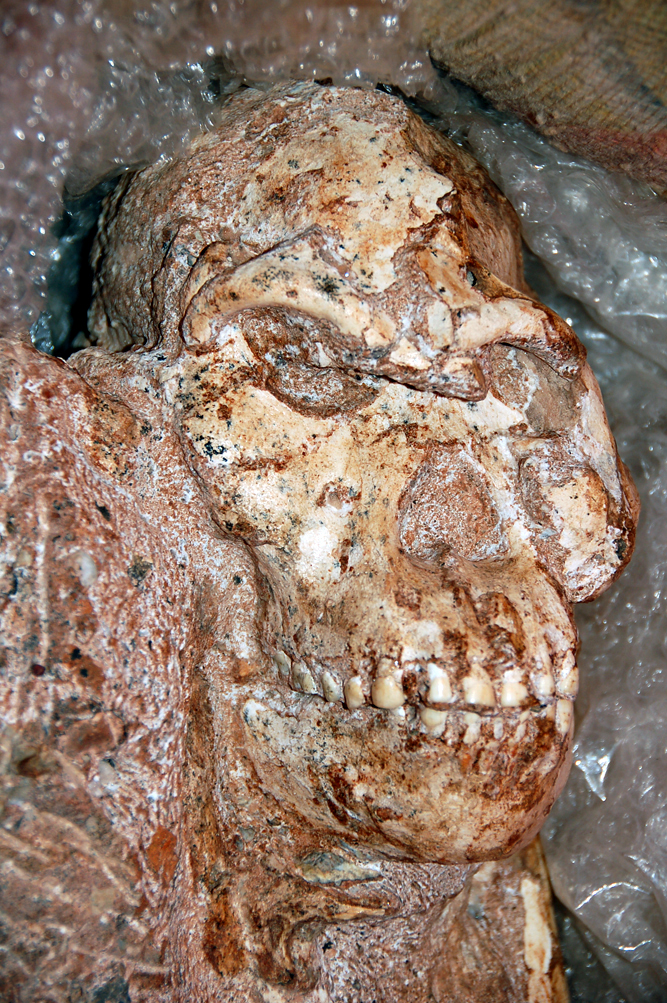 Little Foot's skull - Credit_ Ron Clarke_Wits University