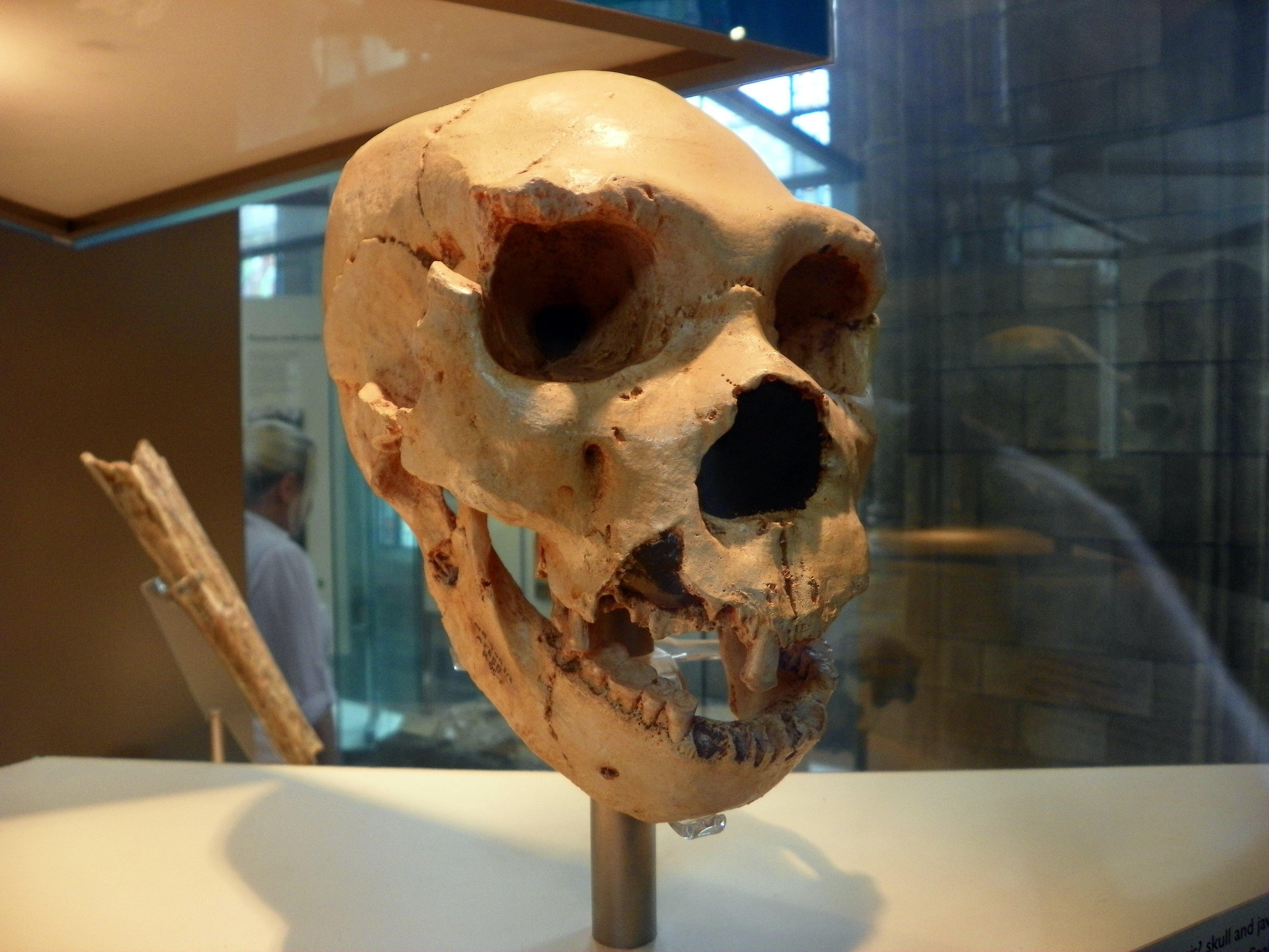 Natural History Museum: WikiPedia