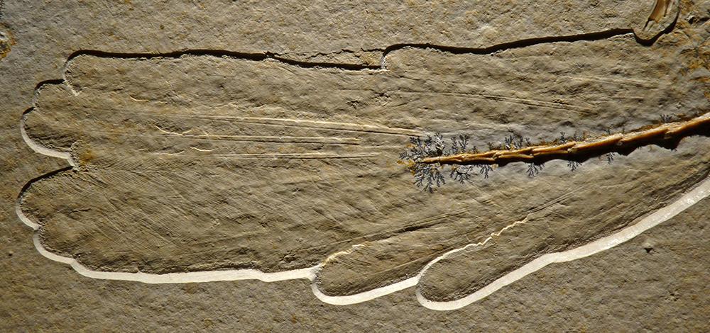 Feathered Wing Fossil: LMU Munich