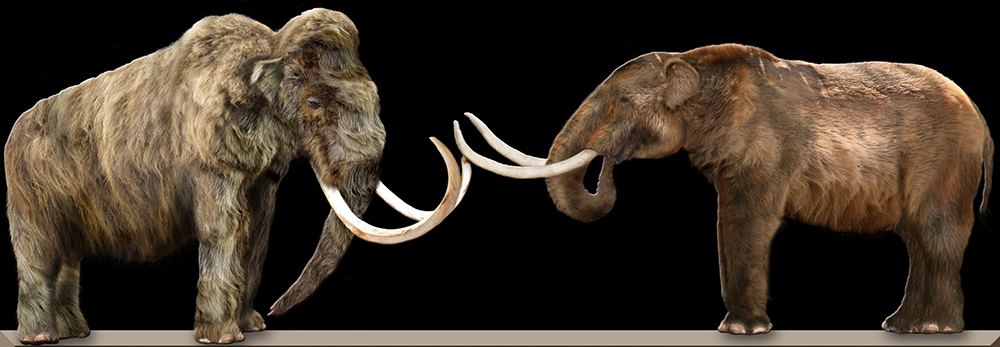 Mammoth vs Mastodon: WikiPedia