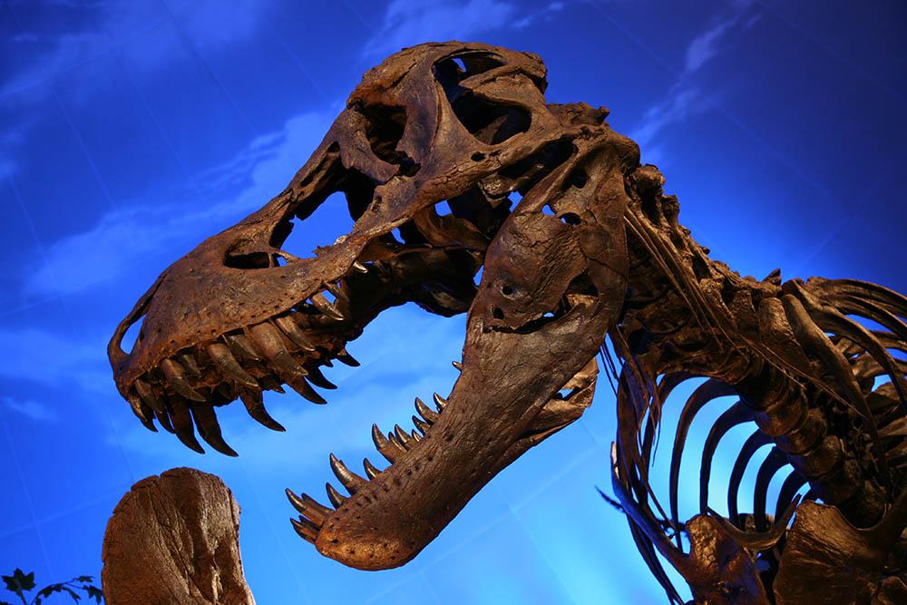 T Rex cast: Wikimedia