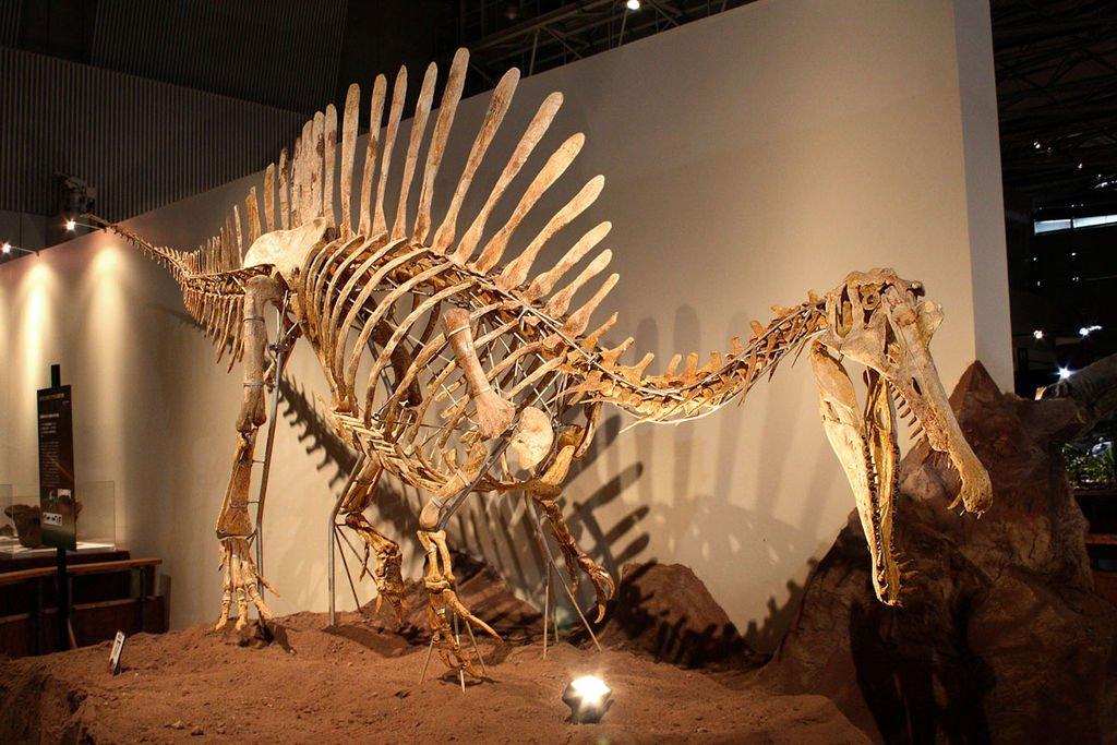 Spinosaurus: Wikimedia