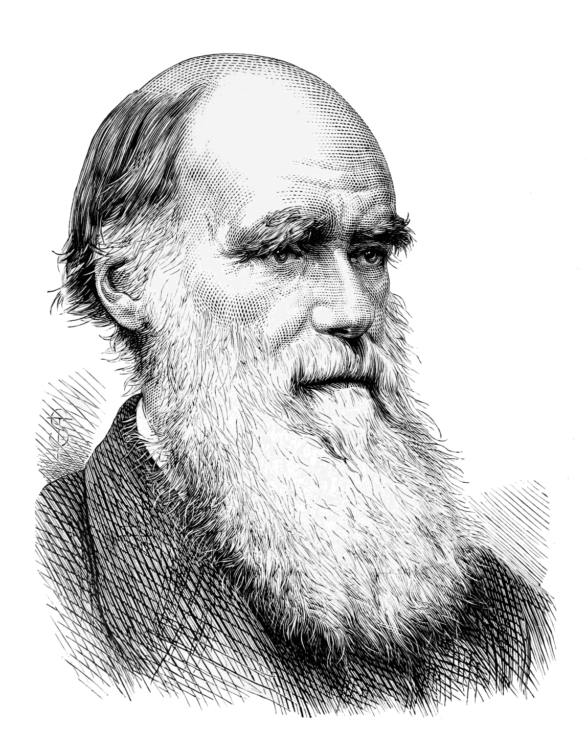 an analysis of the bookthe origin of species by charles darwin The origin of species study guide contains a biography of charles darwin, literature essays, a complete e-text, quiz questions, major themes, characters, and a full summary and analysis.