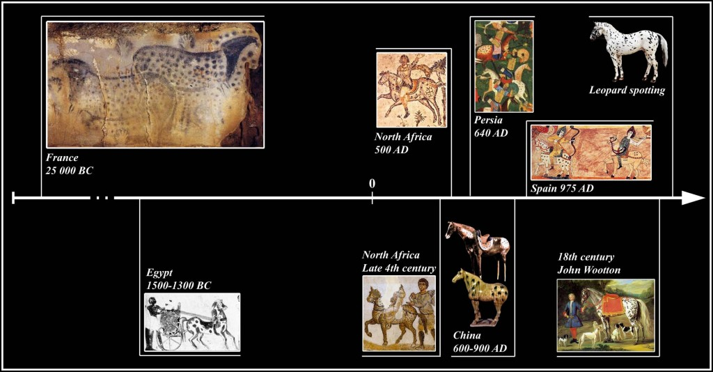 Examples of leopard complex horses in human artefacts and culture. Pictures from left to right: (a) the panel of the dappled horses—'Le panneau des Chevaux ponctue´s', Cabrerets, Lot France (Photo from P. Cabrol, Centre de Pre´histoire du Pech Merle). (b) There are several examples of spotted horses in the art of ancient Egypt dating from 1500 to 1300 BC (http://www.spanishjennet.org/history.shtml). (c) The mosaics from North Africa are from the Dominus Iulius at Carthage [1]. (d ) This Persian plateau was passed from conqueror to conqueror until the arrival of the Muslims from the South in 640 AD. Persian art objects from that time to the present show spotted horses, suggesting that spotted horses were common in Persia since before the Muslim conquest ( picture from http://www.spanishjennet. org/history.shtml). (e) Chinese horse sculptures dating to 600–900 AD. (f ) The mosaic (Spain 975 AD) is from the Beato de Gerona Codex, dating to 975 and attributed to the Abad Domenicus [2]. (g)