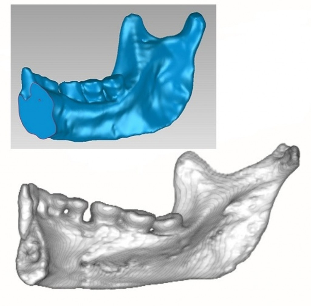 The mandible of LB1 (in blue) compared to that of an indigenous person from the archaeological site of Roonka, Australia. CT scan of LB1 courtesy Prof Mike Morwood; CT scan of Roonka 45 generated by Assoc Prof Arthur Durband