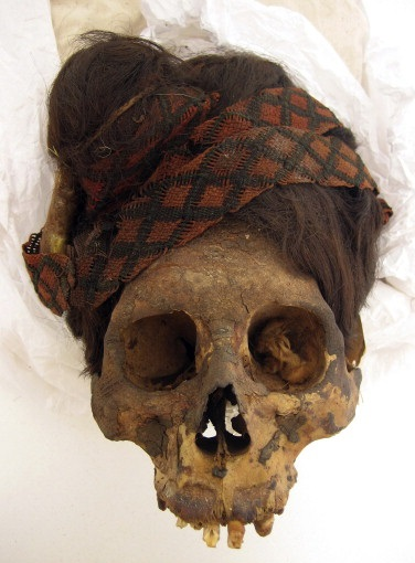 Cranium with headdress from burial 24 (PARAC-0070, ACL-4826) from the Paracas Necropolis of Wari Kayan illustrating exceptional preservation, natural mummification, and textile headdress (Photograph by Elsa Tomasto Cagigao).