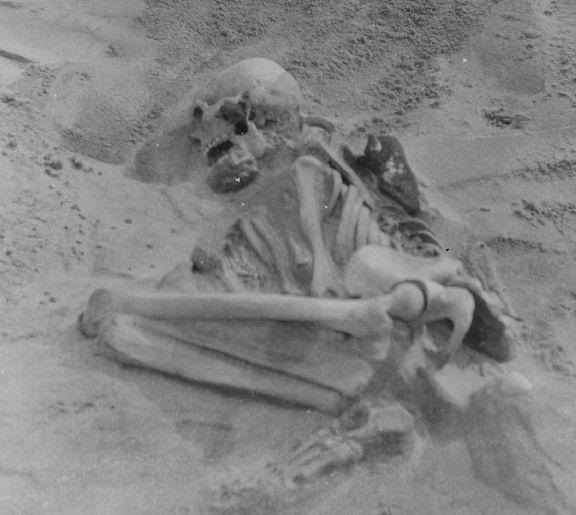 This is a photo of Tiree skeleton in situ, taken during the original excavation in  1912 CREDIT : The Hunterian