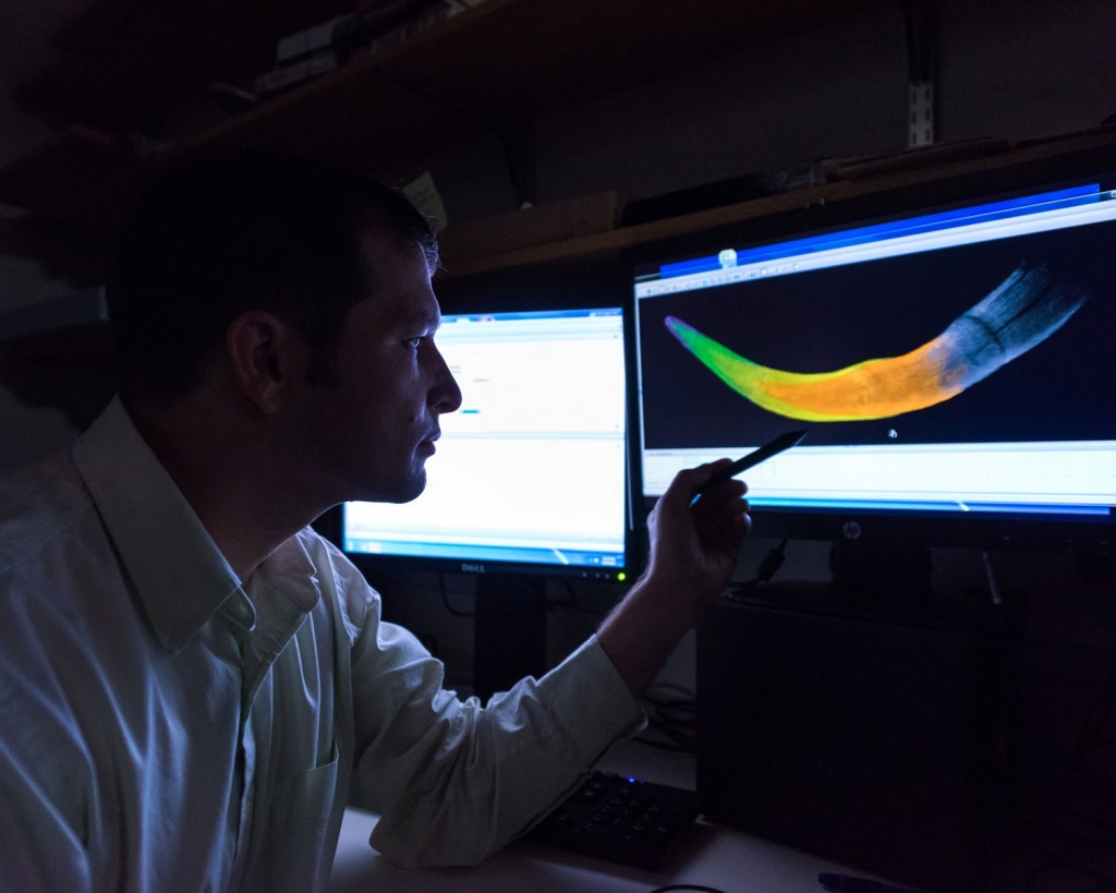 U-M doctoral student Michael Cherney views a colorized CT scan image of a juvenile woolly mammoth tusk. The various colors denote different years of growth. Credit : University of Michigan