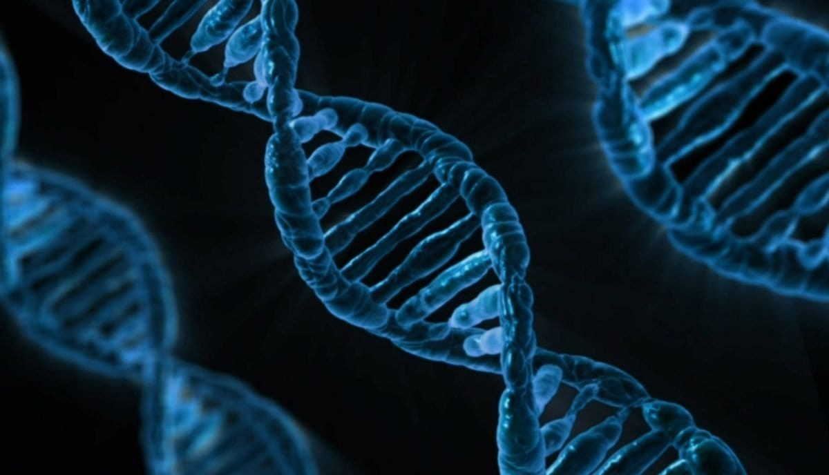 digging into the dna for a successful diet
