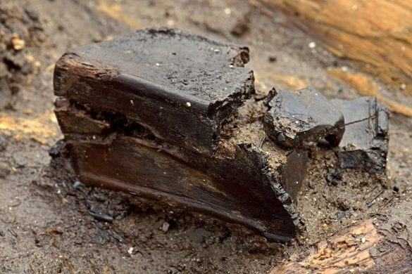 Delicate wooden box found recently © Cambridge Archaeological Unit