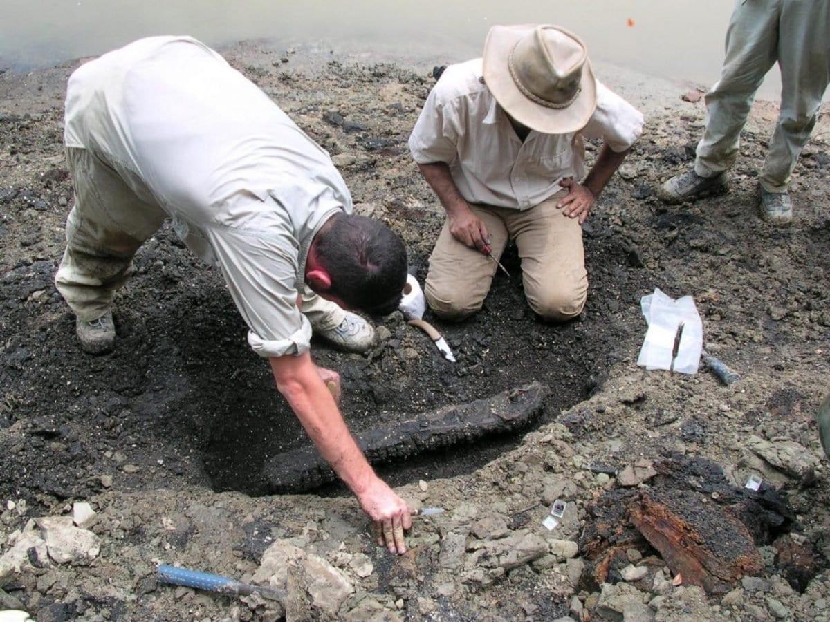 13-million-year-old 'storyteller' crocodylian fossils show evidence for parallel evolution