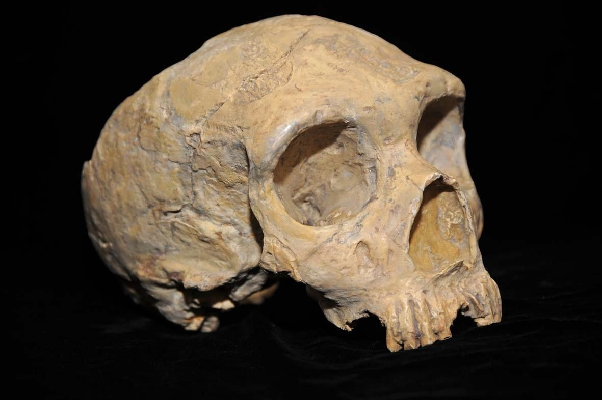 neanderthal y chromosome offers clues to what kept us separate species