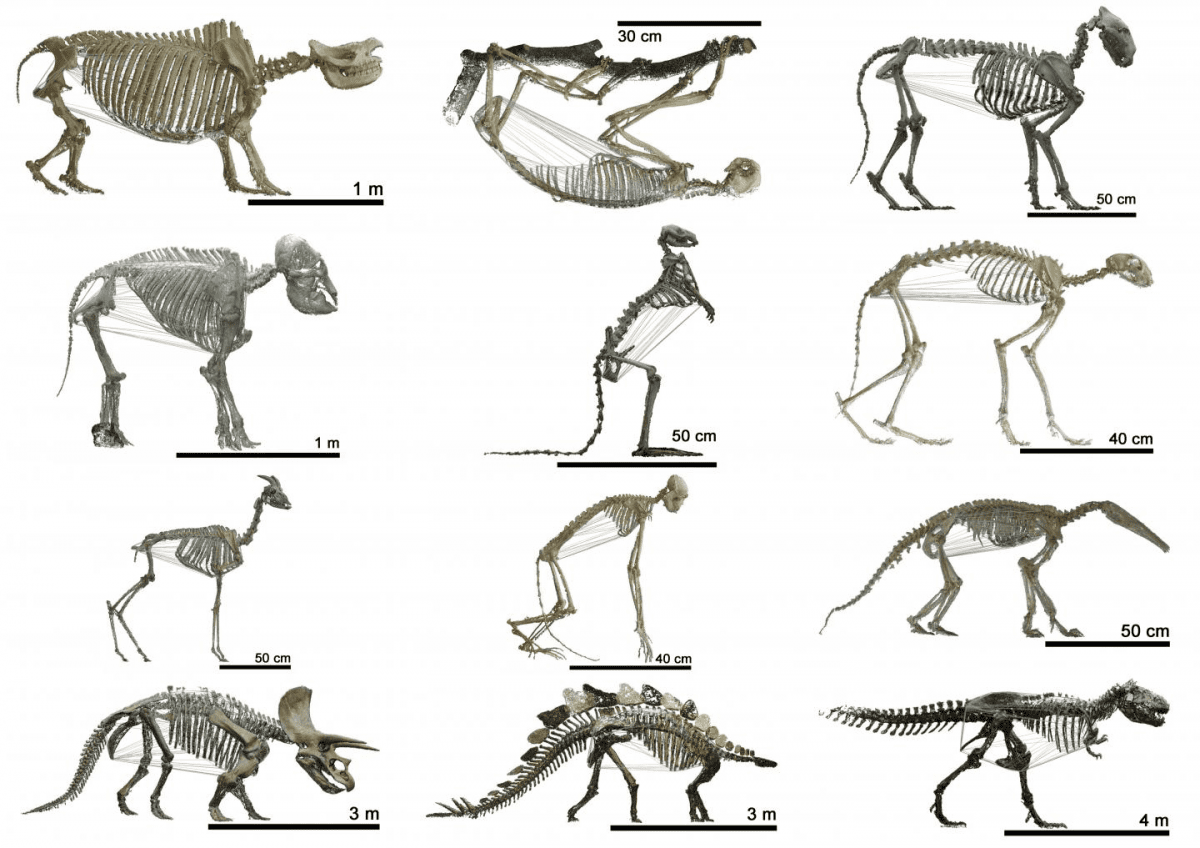 This image shows 3-D animations of animals from the early ages until today. CREDIT image: UZH
