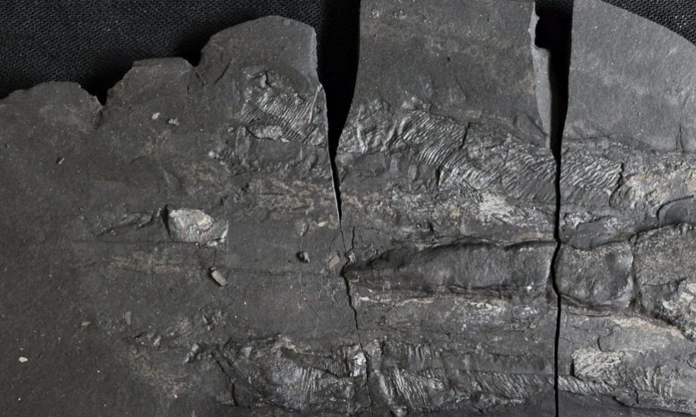 Exceptionally preserved Jurassic sea life found in new ...