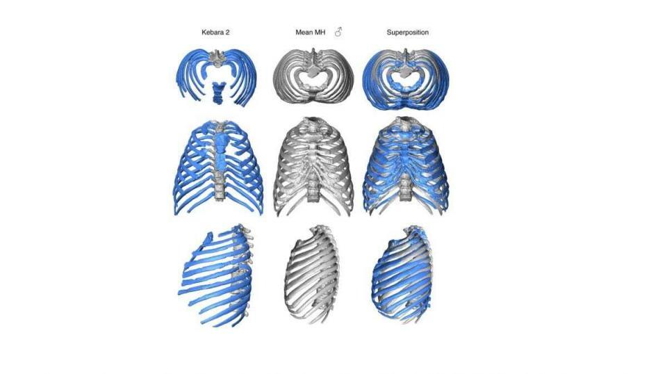 Study Reconstructs Neandertal Ribcage Offers New Clues To Ancient