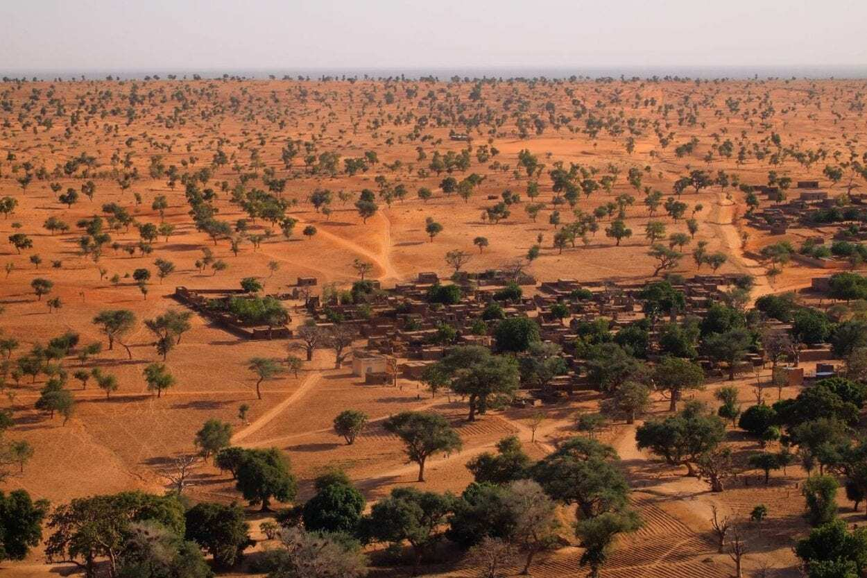 Artificial Intelligence Reveals Hundreds of Millions of Trees in the Sahara - HeritageDaily