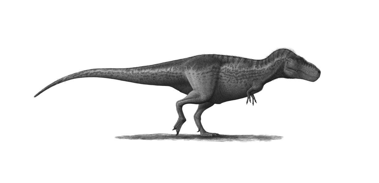 T. Rex Had Huge Growth Spurts, But Other Dinos Grew
