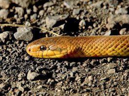 snake 501986 1920